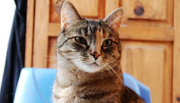 areneros automáticos para gatos